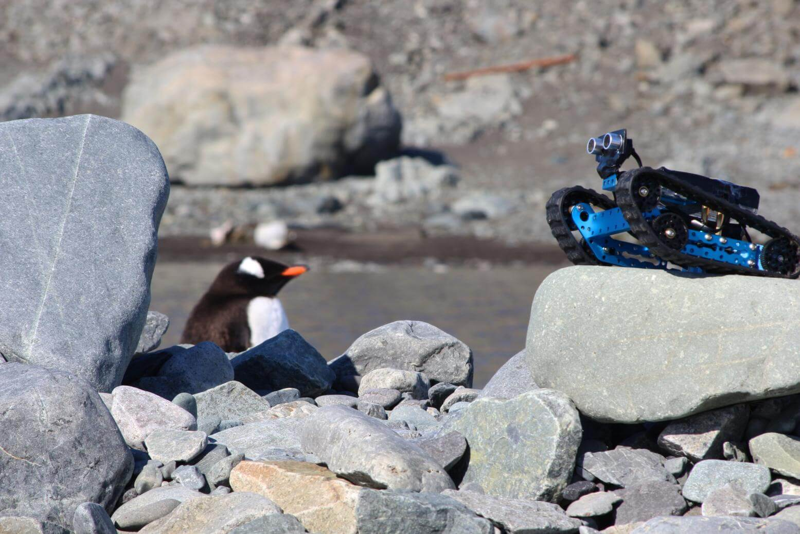 mBot Ranger Roams the Antarctic in Antarctica Research and Education Project